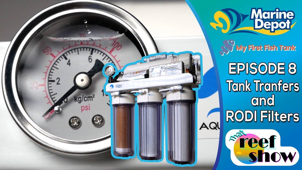 How to Choose an RODI Filter and All About Tank Transfers!  That Reef Show Episode 8