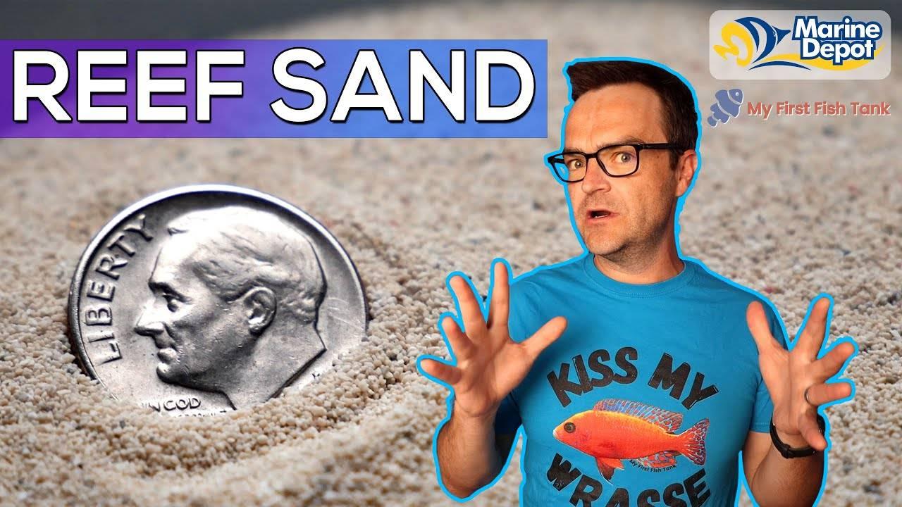 """Don't Buy Reef Sand Before Watching This   Ultimate Beginner Series part 14"