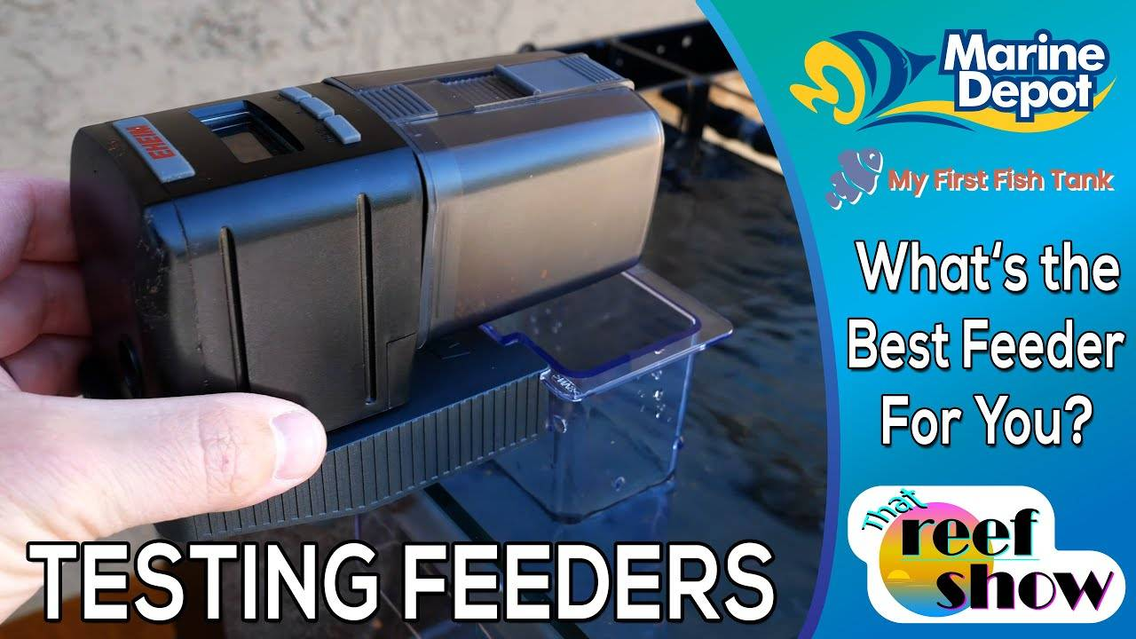 What's the Best Auto Fish Feeder for You?
