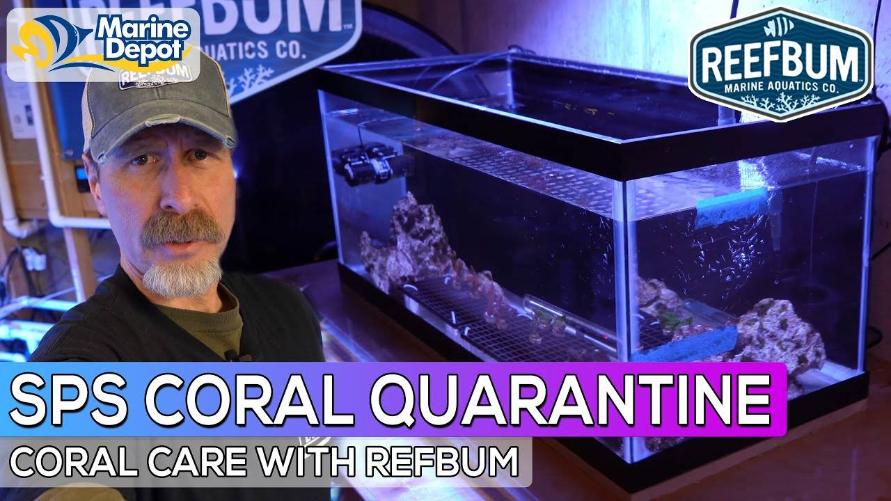 How to Setup a SPS Quarantine Tank: Coral Care with Reefbum