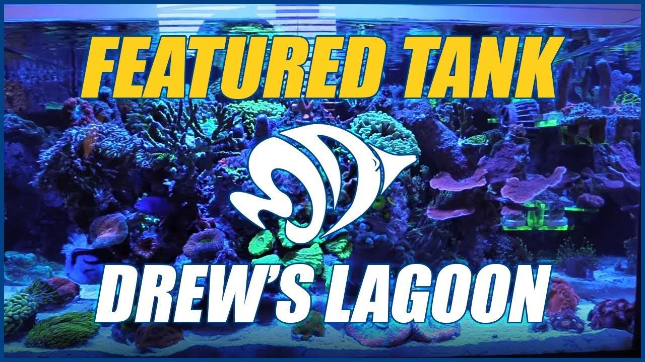 Drew's Lagoon is an AMAZING AIO Nano Reef Aquarium - NEW FEATURED TANK!