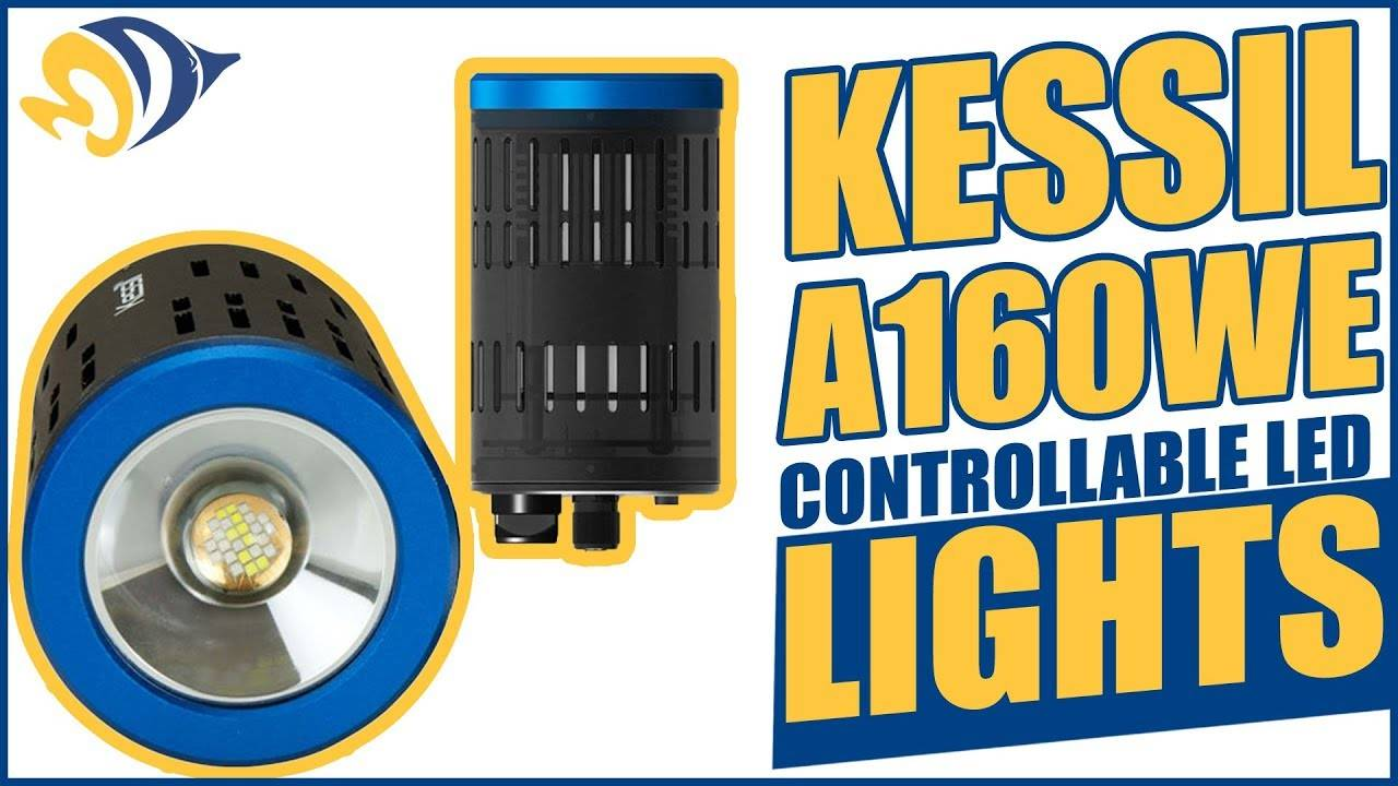 Kessil A160WE Controllable LED Lights: What YOU Need to Know