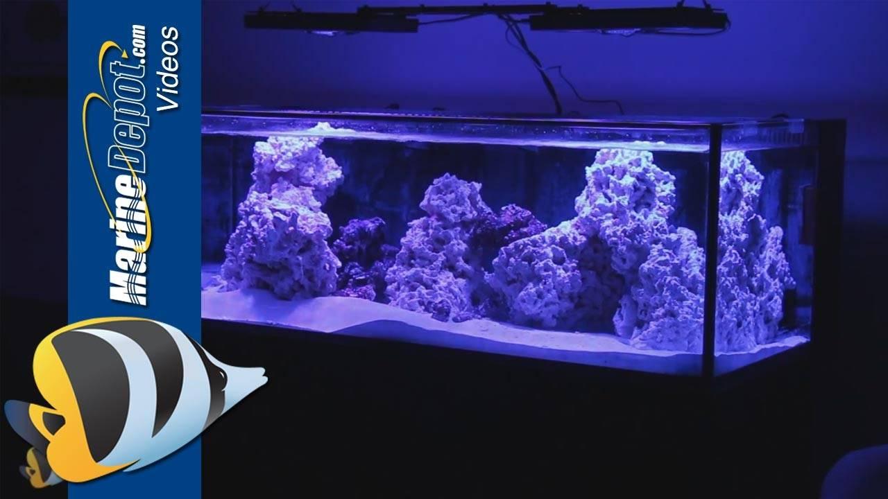 Making the Case for Using LED Aquarium Lights