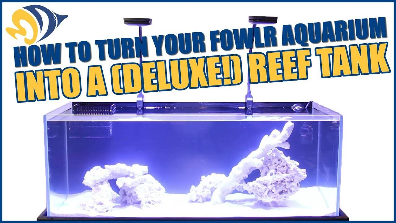 How to turn your FOWLR Aquarium into a (deluxe!) Reef Tank