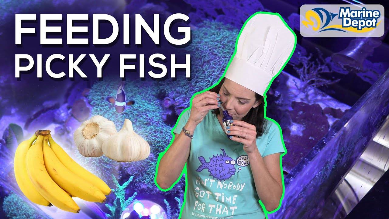 5 TIPS For Feeding Picky Fish In Your Tank | A How-To with Hilary: Marine Biologist of WaterLogged