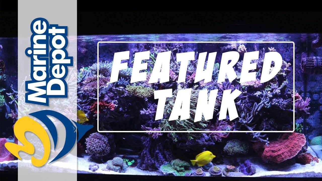 Featured Tank: Garry's 280 Gallon Reef is PACKED with Gorgeous SPS Corals!