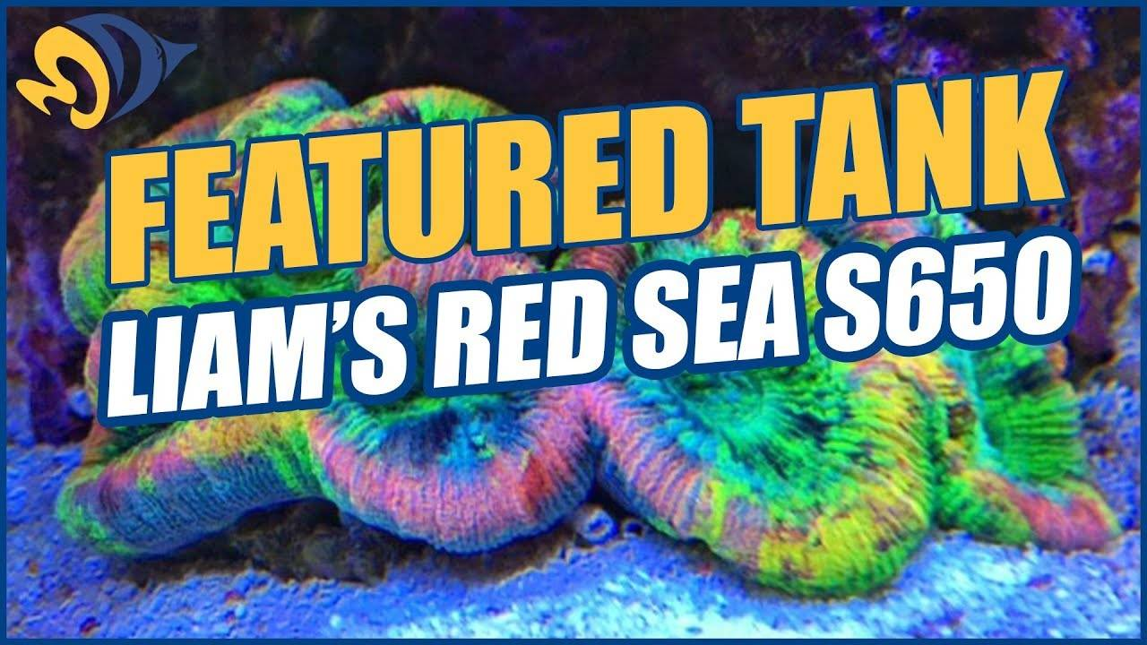 Liam's (aka Lovatt) Red Sea Max S-650 Mixed Reef Aquarium - A NEW Featured Tank from the UK!