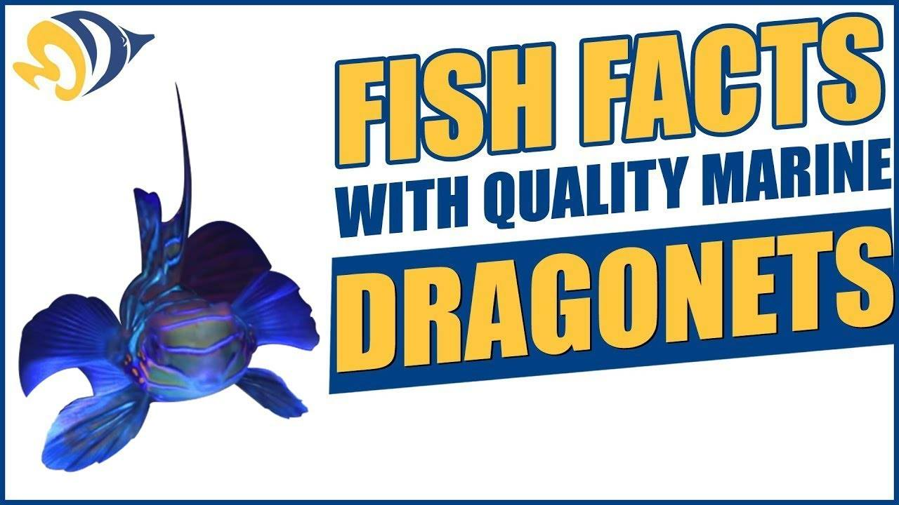 """""""Fish Facts with Quality Marine"""