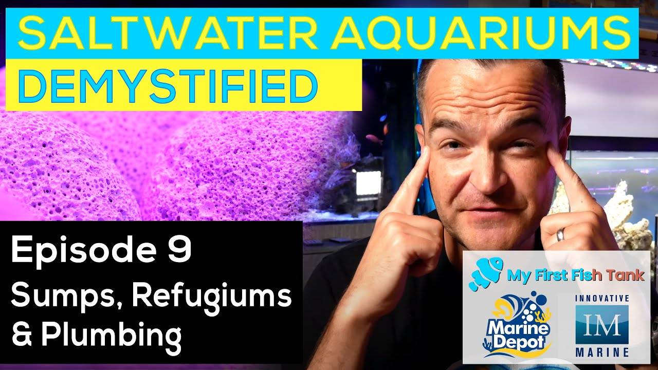"""Saltwater Aquariums Demystified Ep. 9: Sumps"