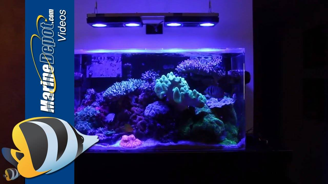 Marine Depot Featured Tank: Bret's Mature 55 Gallon Mixed Reef