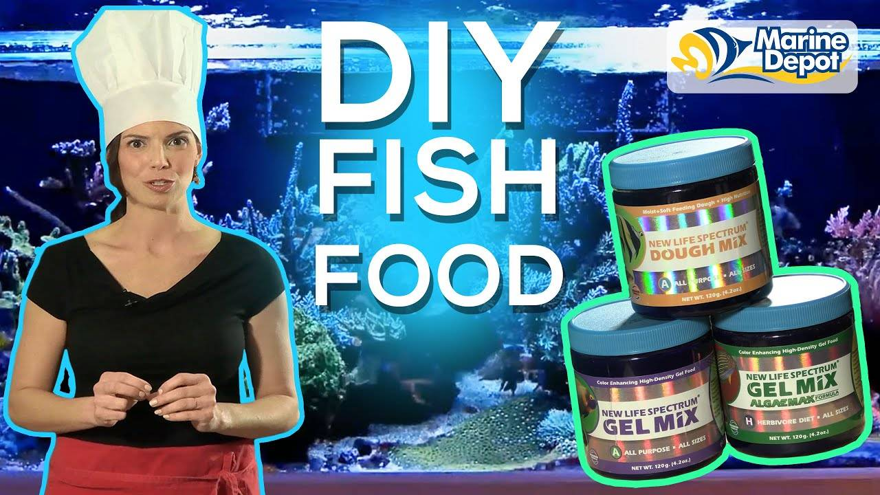 Make Your Own Fish Food and Save Money | A DIY with Hilary of WaterLogged