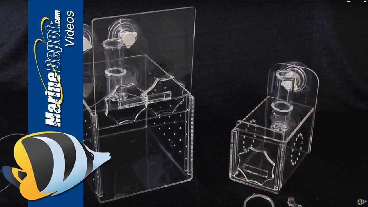 Fish Traps: How to catch aquarium fish like a PRO