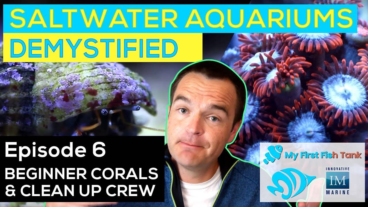 Saltwater Aquariums Demystified Ep. 6: Corals and Cleanup Crew
