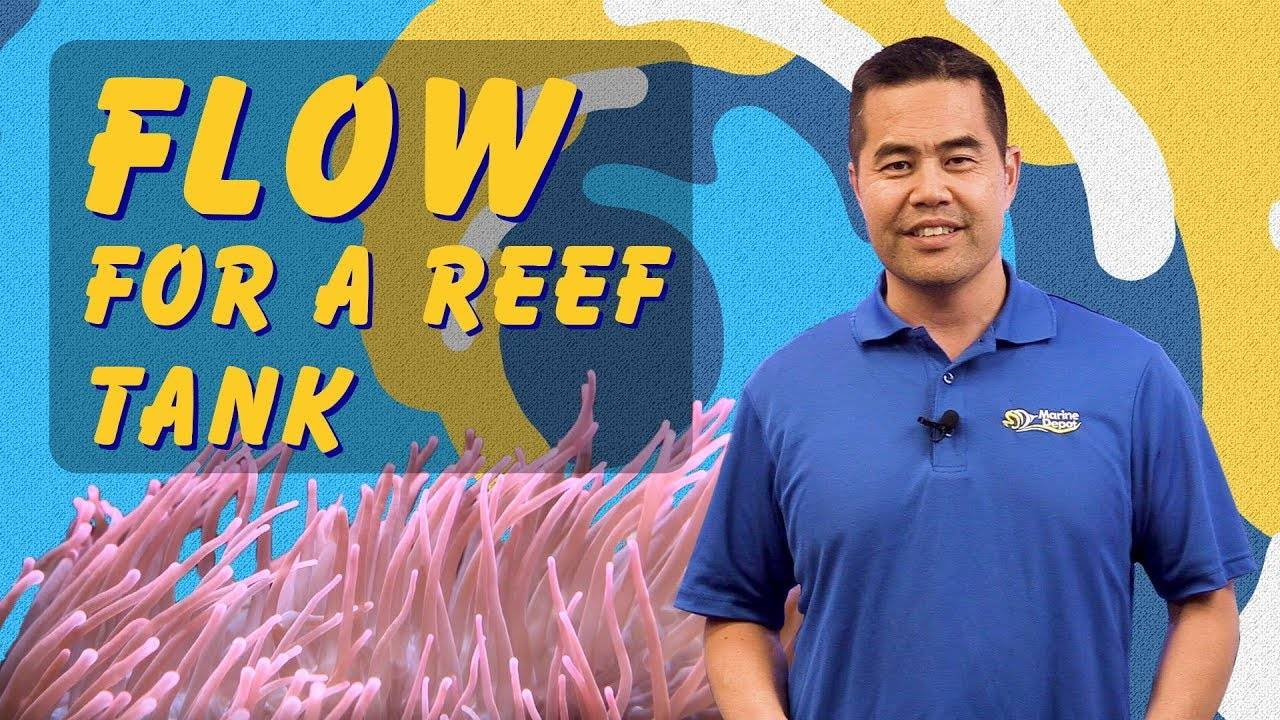 Aquarium Water Circulation: How Pumps & Powerheads Help Create Ideal Water Flow for a Reef Tank