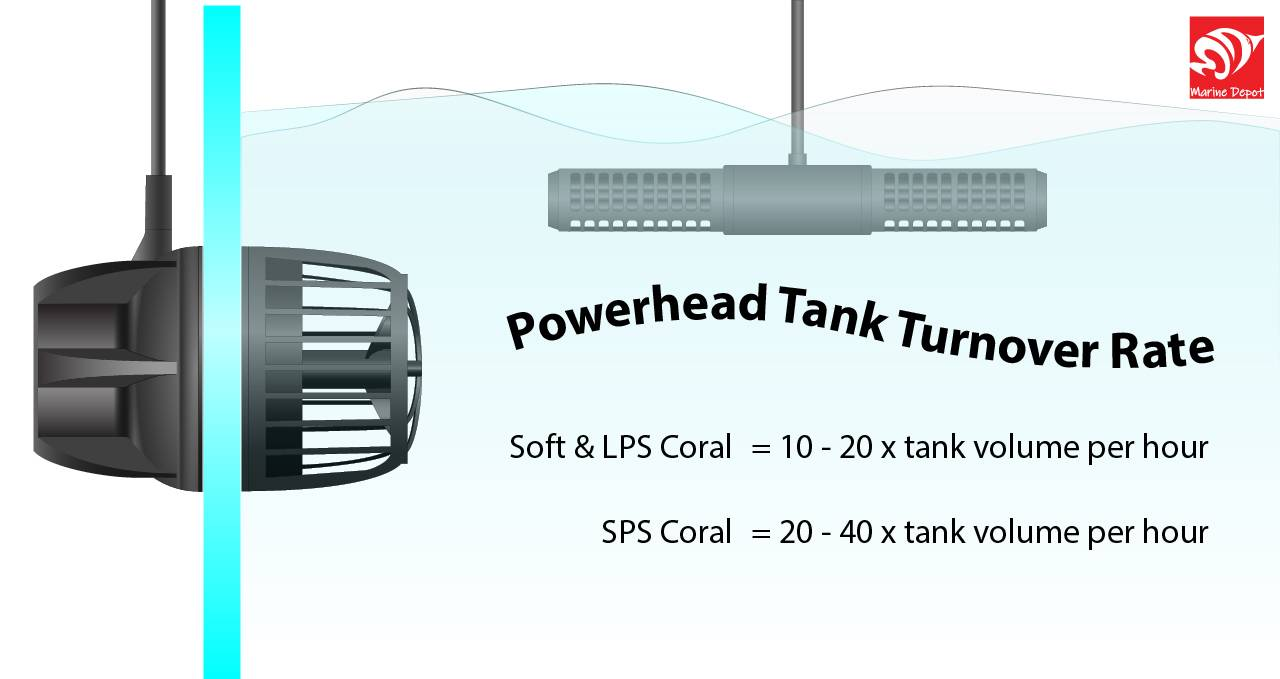 Infographic of powerhead pump flow rate needed for corals in order to achieve better nutrient export which can affect coral growth and color