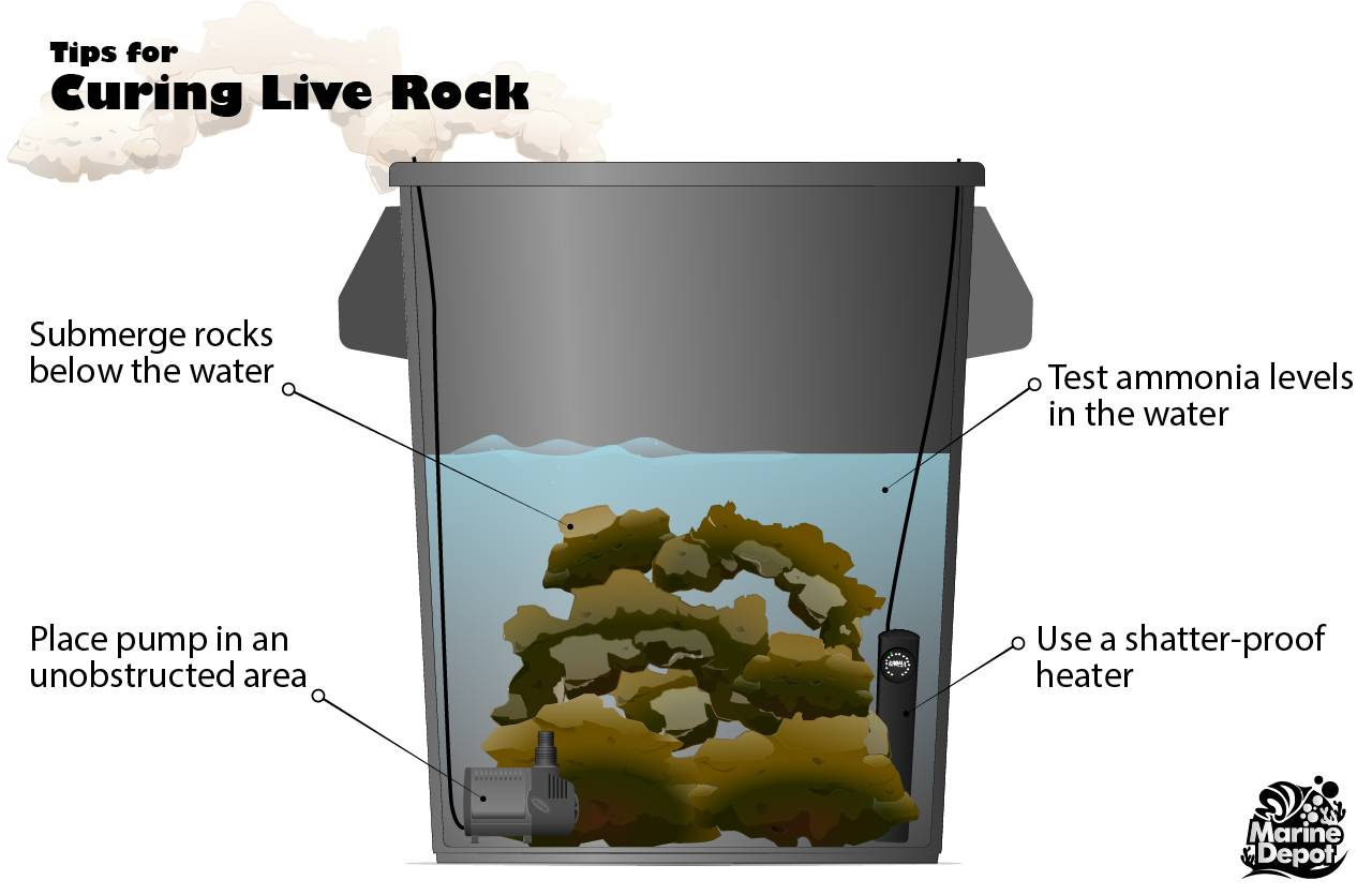 Curing live rock tips