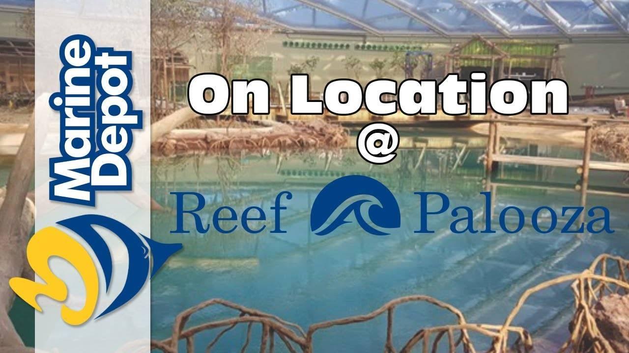 Julian Sprung: Little Stories 2 - 2017 Reef-A-Palooza California