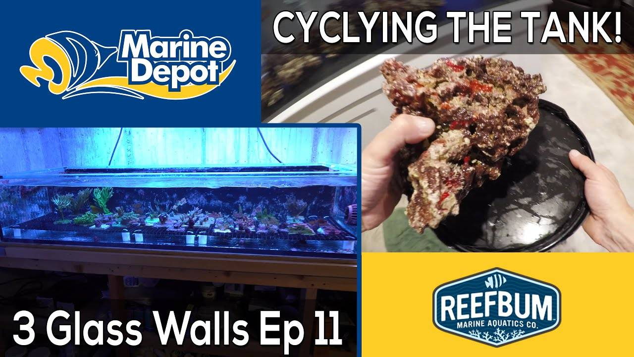 Cycling the Tank! 3 Glass Walls with Reefbum Part 11