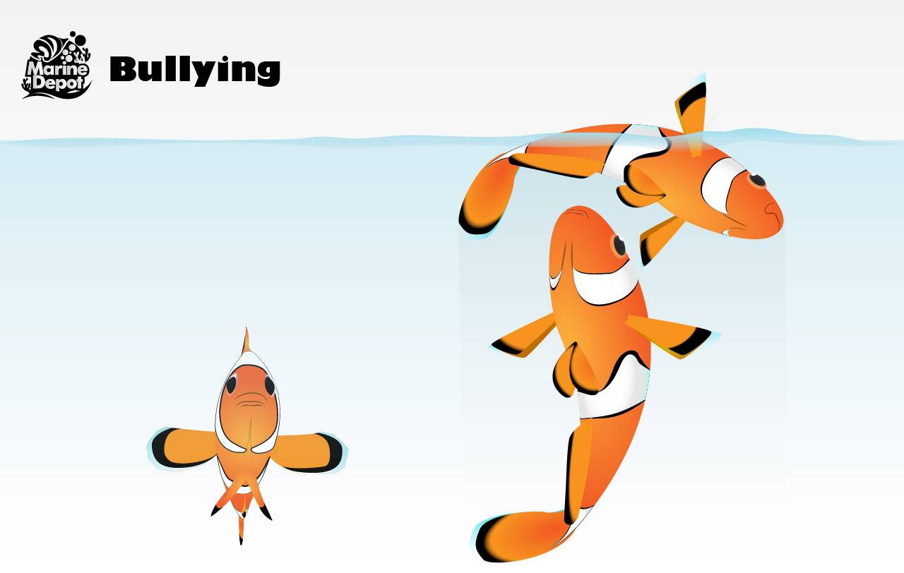 Bullying in the tank is due to incompatibility of fish and can a new fish to succumb to being beaten to death or jumping out of the aquarium