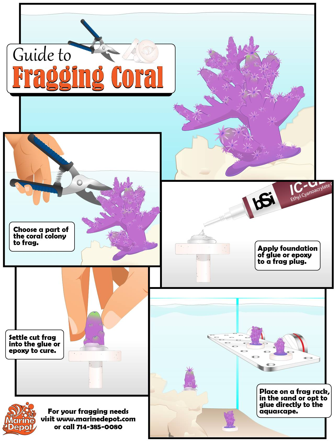 Simple guide to frag coral