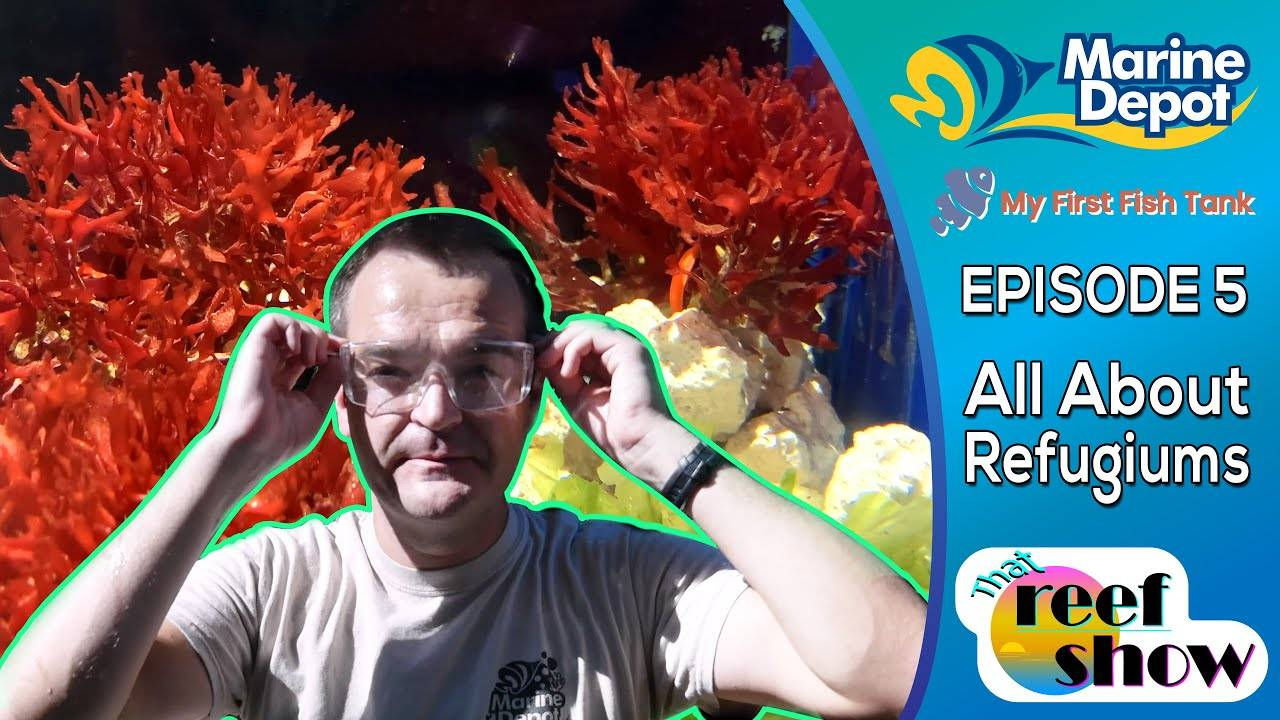 That Reef Show Ep 5: How to Start a Refugium!