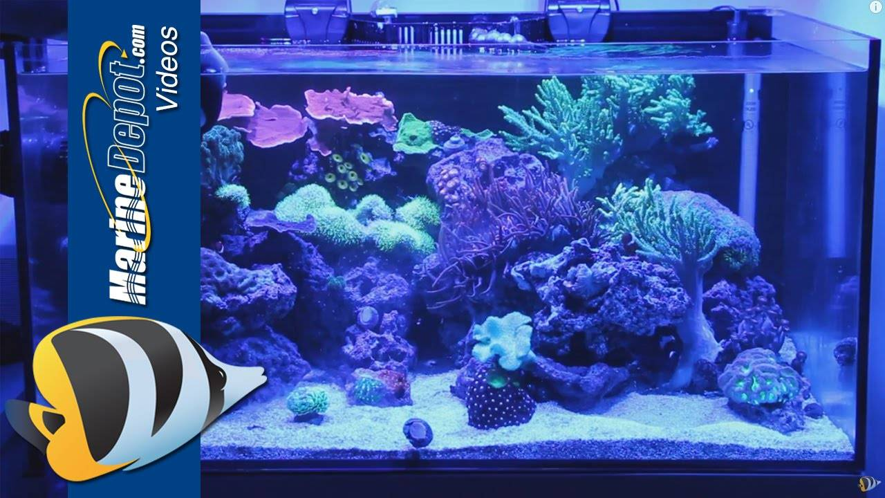 Coral Food: Make Your Corals Fat and Healthy