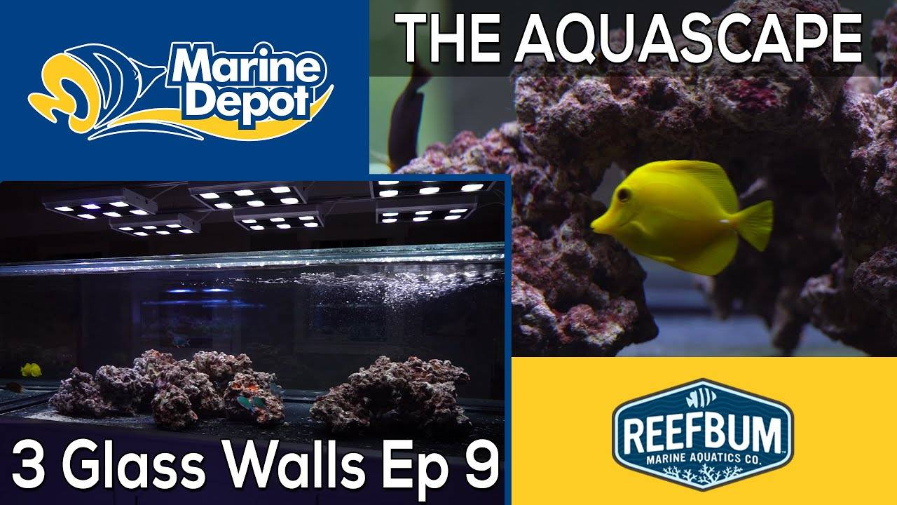 Aquascaping the Peninsula! 3 Glass Walls with Reefbum Part 8