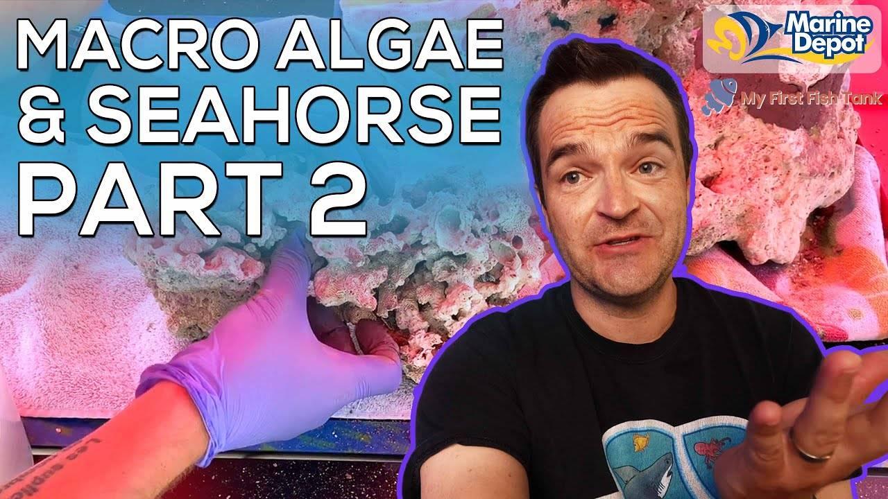 """Seahorse Macro Algae Tank"