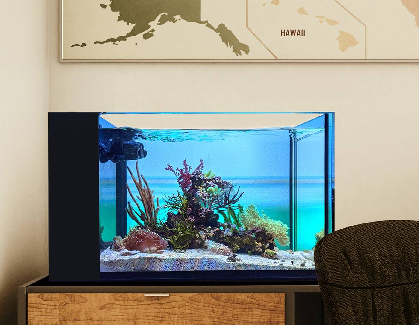 A set up nano tank in an office environment