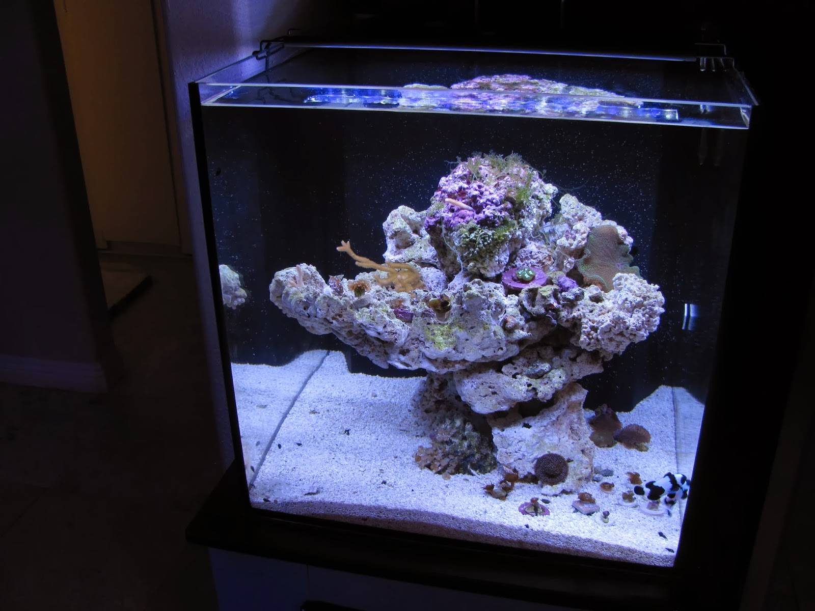 Orbit Marine LED Aquarium Light setup on the aquarium