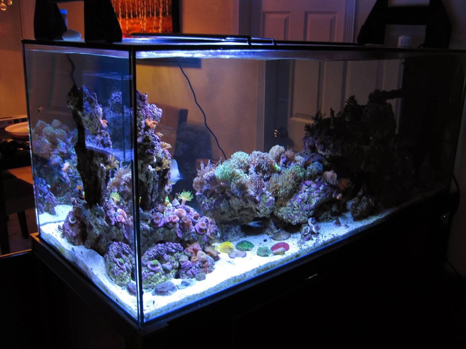 Orbit Marine LED Aquarium Light beauty shot