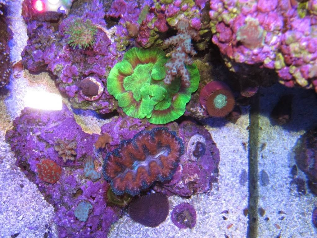 coral beauty shot