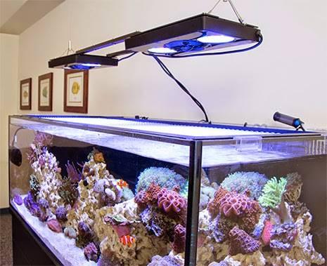 Innovative marine reef tank