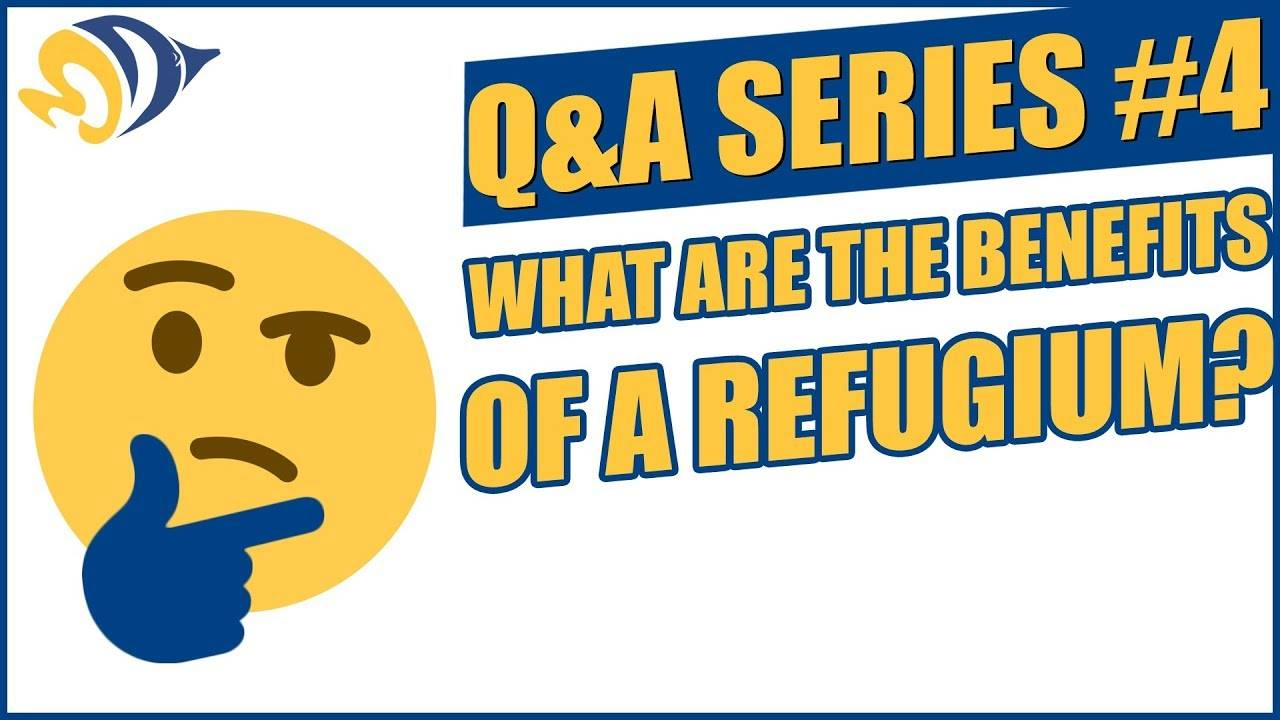 Q&A Series #4: What are the Benefits of a Refugium?