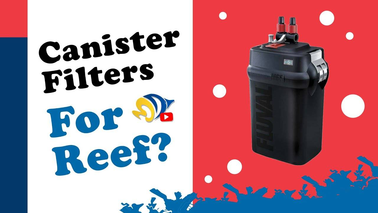 Are Canister Filters Good for Reef Tanks?