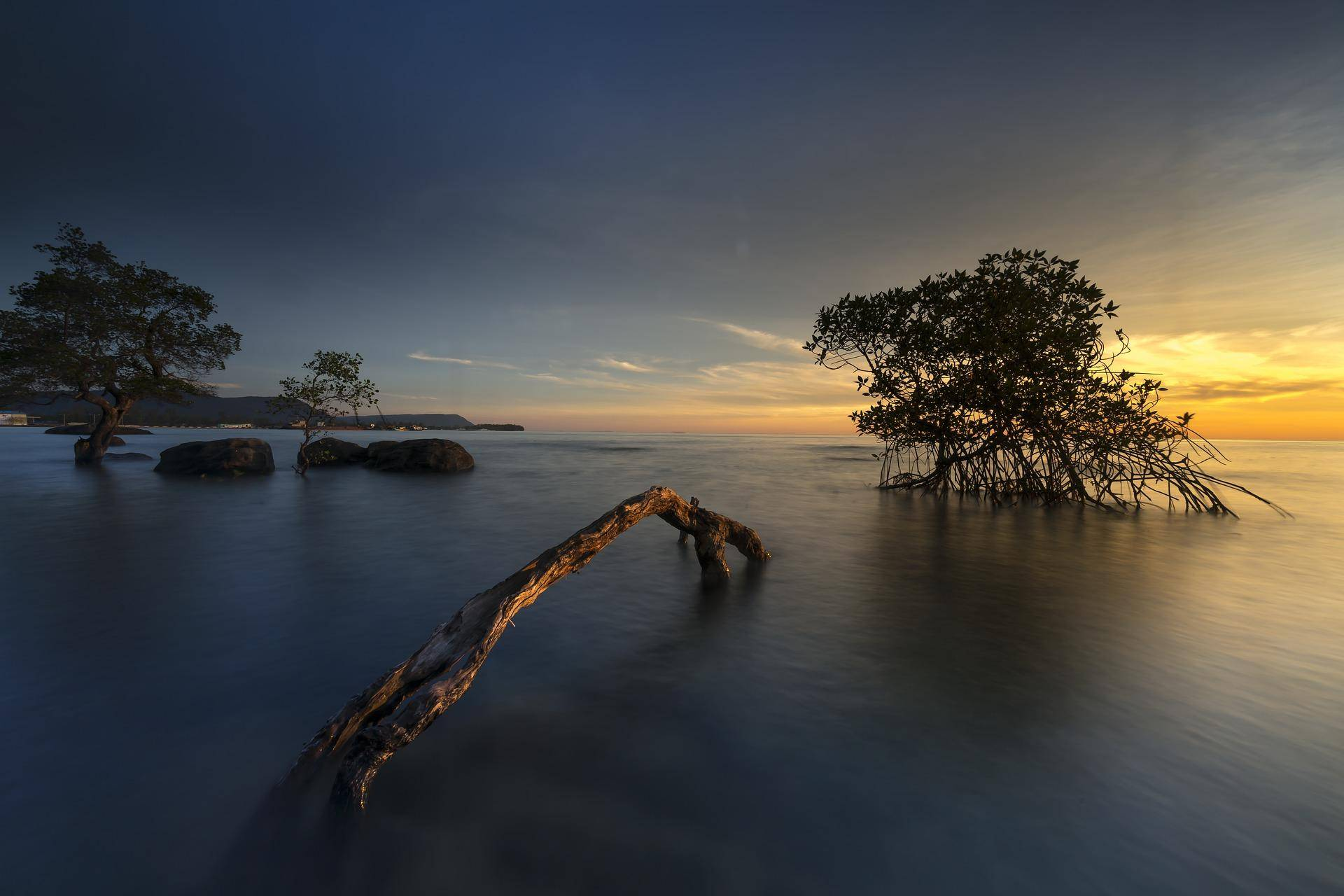 Mangroves in their natural coastal environment