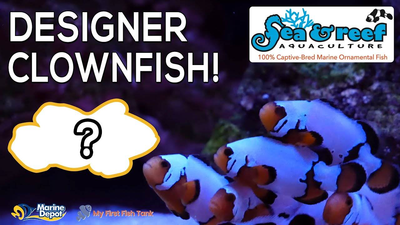 Rare and Expensive Clownfish Unboxing From Sea & Reef Aquaculture!