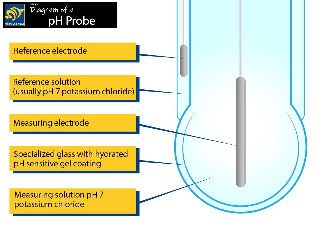 Diagram of pH probe electrodes and bulb