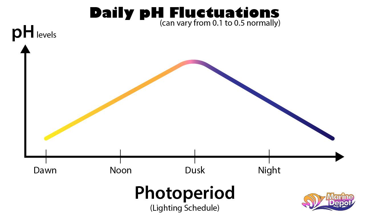 Graph of pH fluctuations rising during the day and lowering after dusk