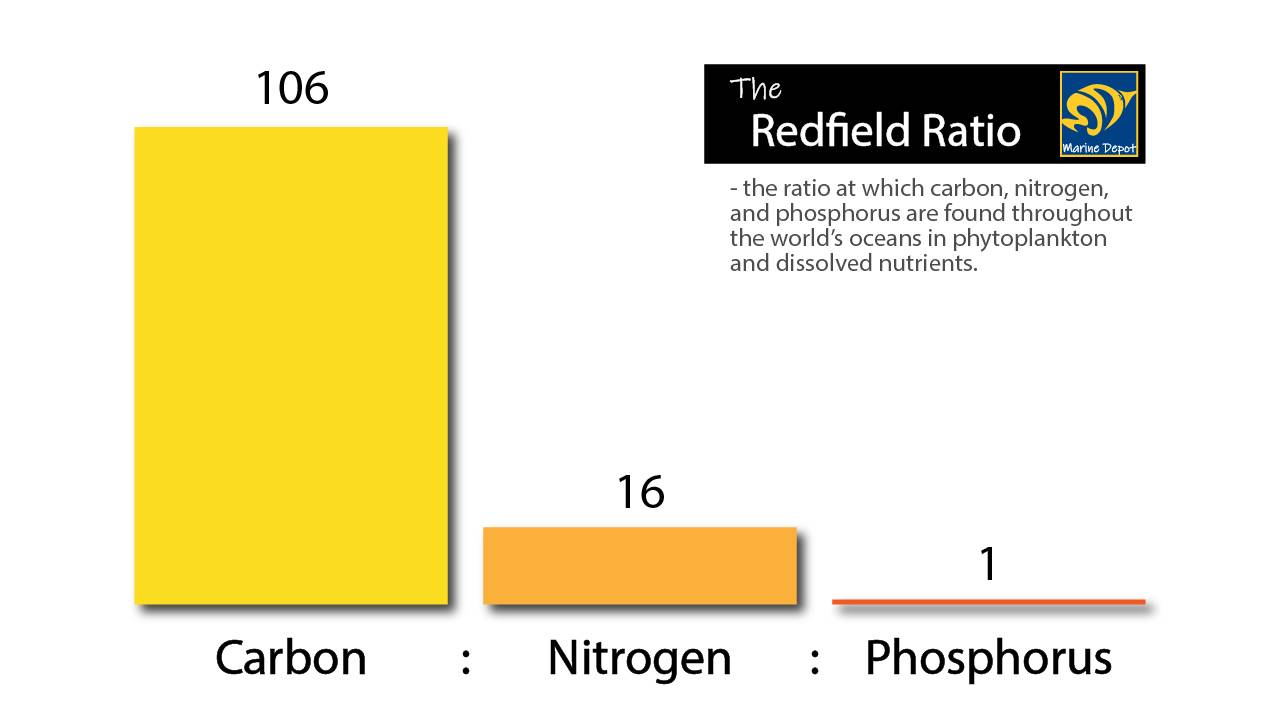 redfield ratio graph of carbon : nitrogen : phosphorus ratios found in the oceans around the world
