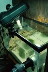 Refugium fitted with the JBJ Macro-Glo fixture