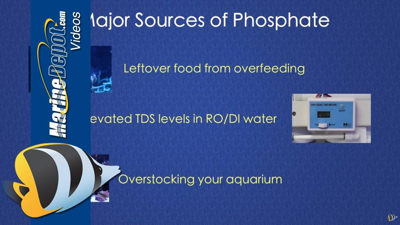 How to Control Phosphate in a Reef Tank