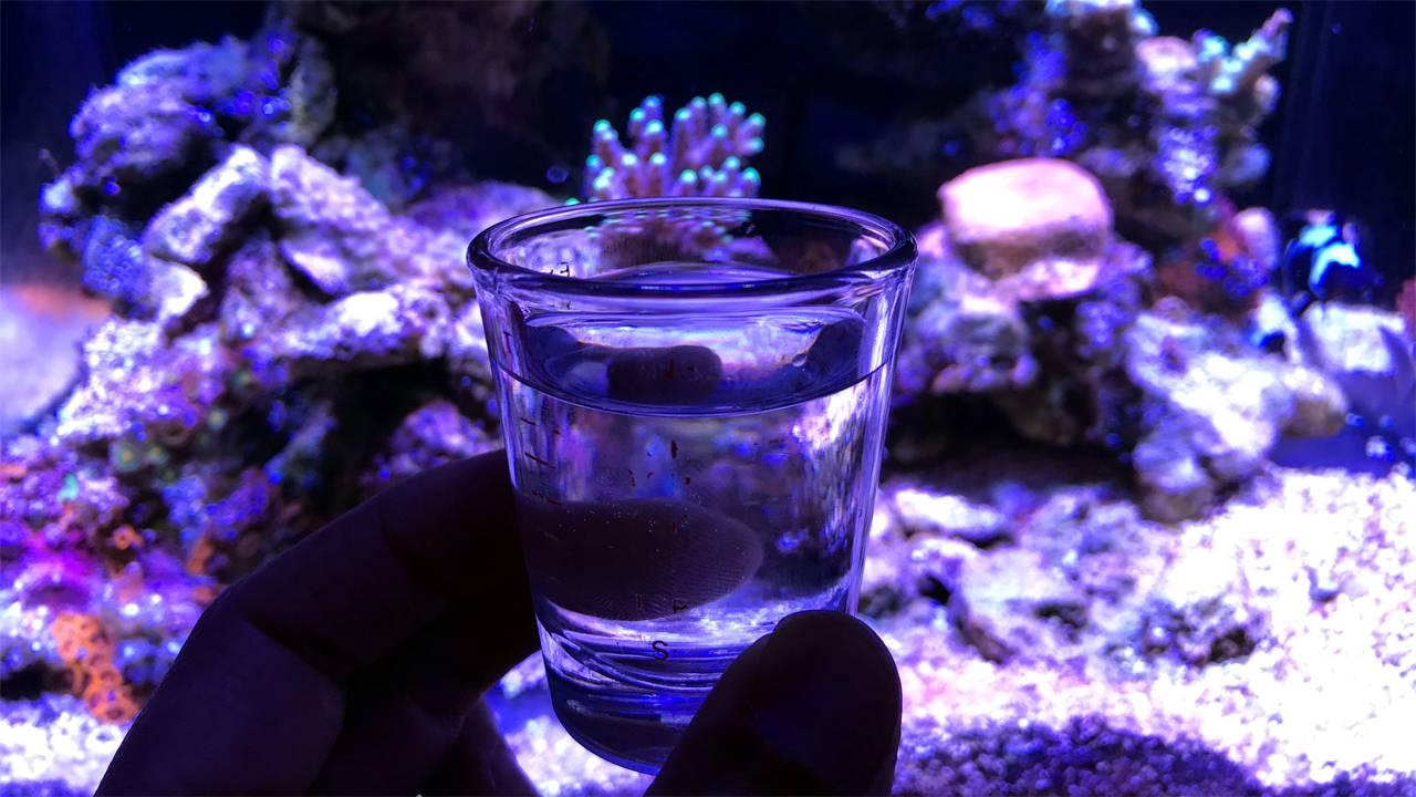 vodka as a liquid carbon source for the reef aquarium