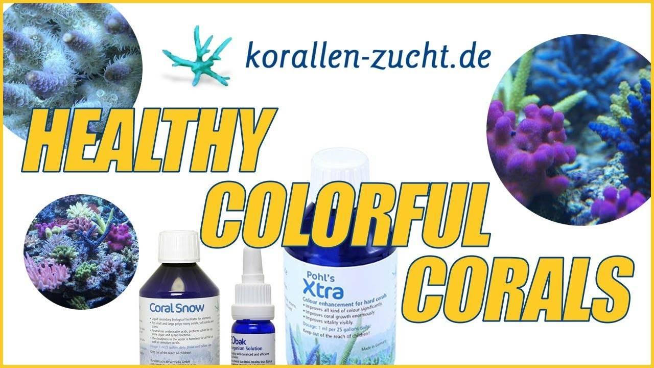 Robert's Secret Sauce From Korallen-Zucht For Growing Healthy & Colorful Corals