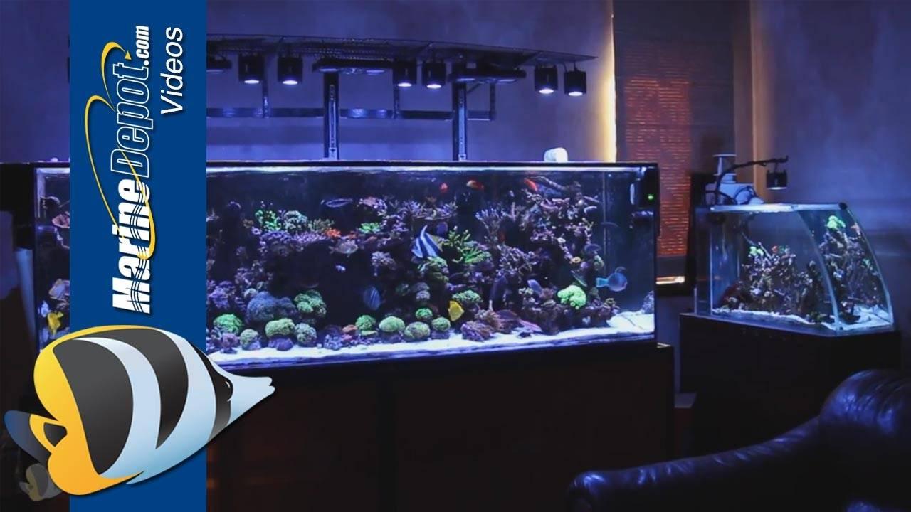 Marine Depot Featured Tank: Matt's Fully Loaded 300 Gallon Mixed Reef