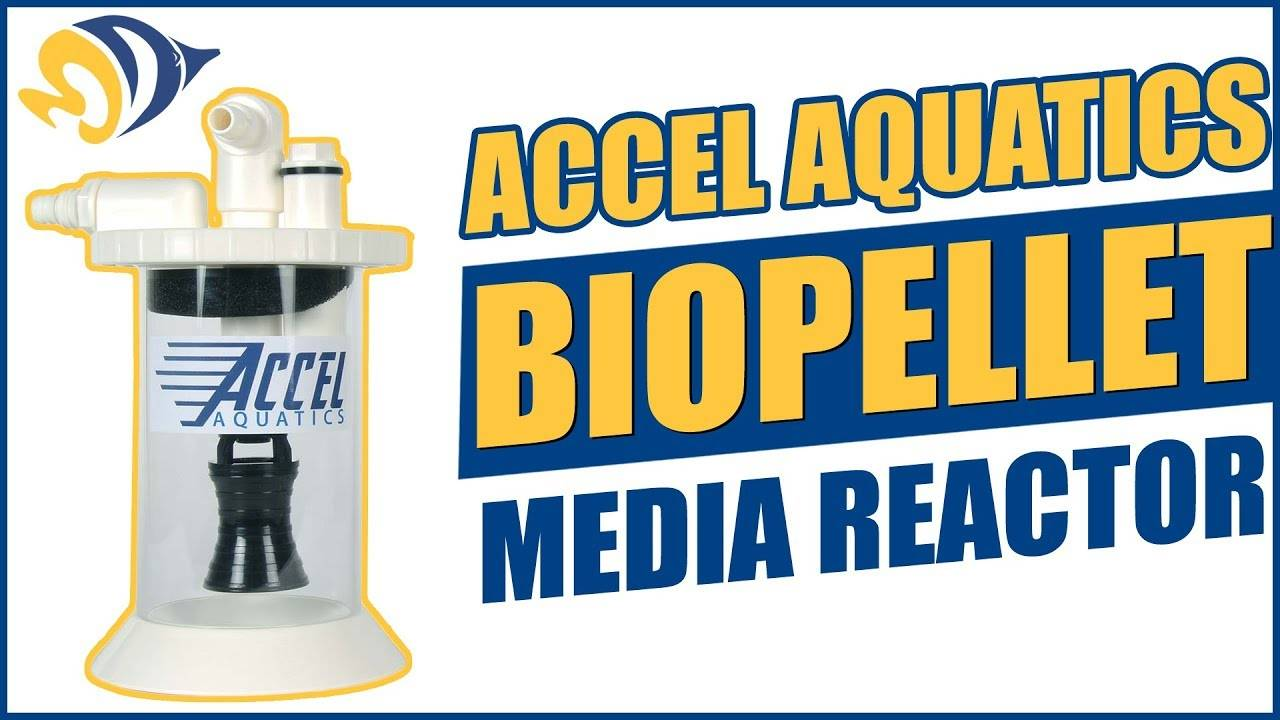 Accel Aquatics BioPellet Media Reactor: What YOU Need to Know