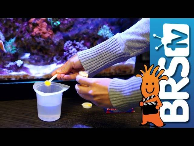 Attempting to Remove Cyano Bacteria | How To Tuesday