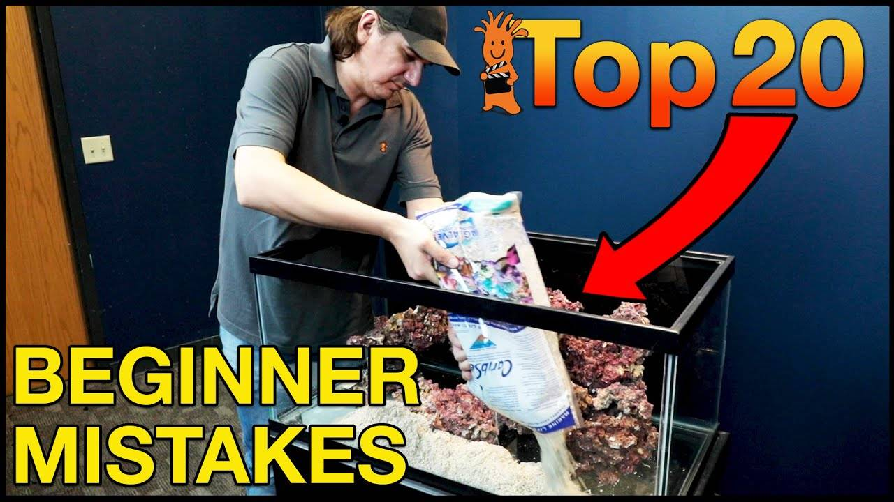 Top 20 Saltwater Aquarium Beginner Mistakes To Avoid. If Only We Had Known