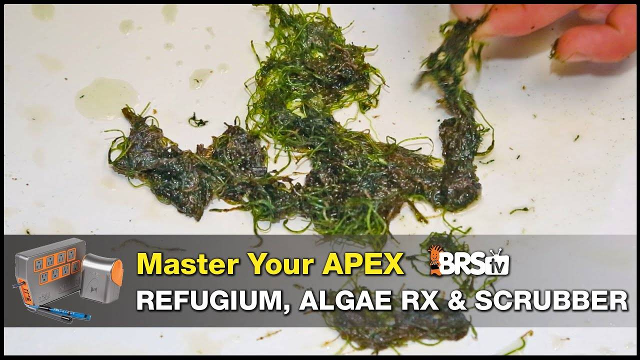 Neptune Apex Guide - Refugium, Algae Scrubbers and Algae Reactors