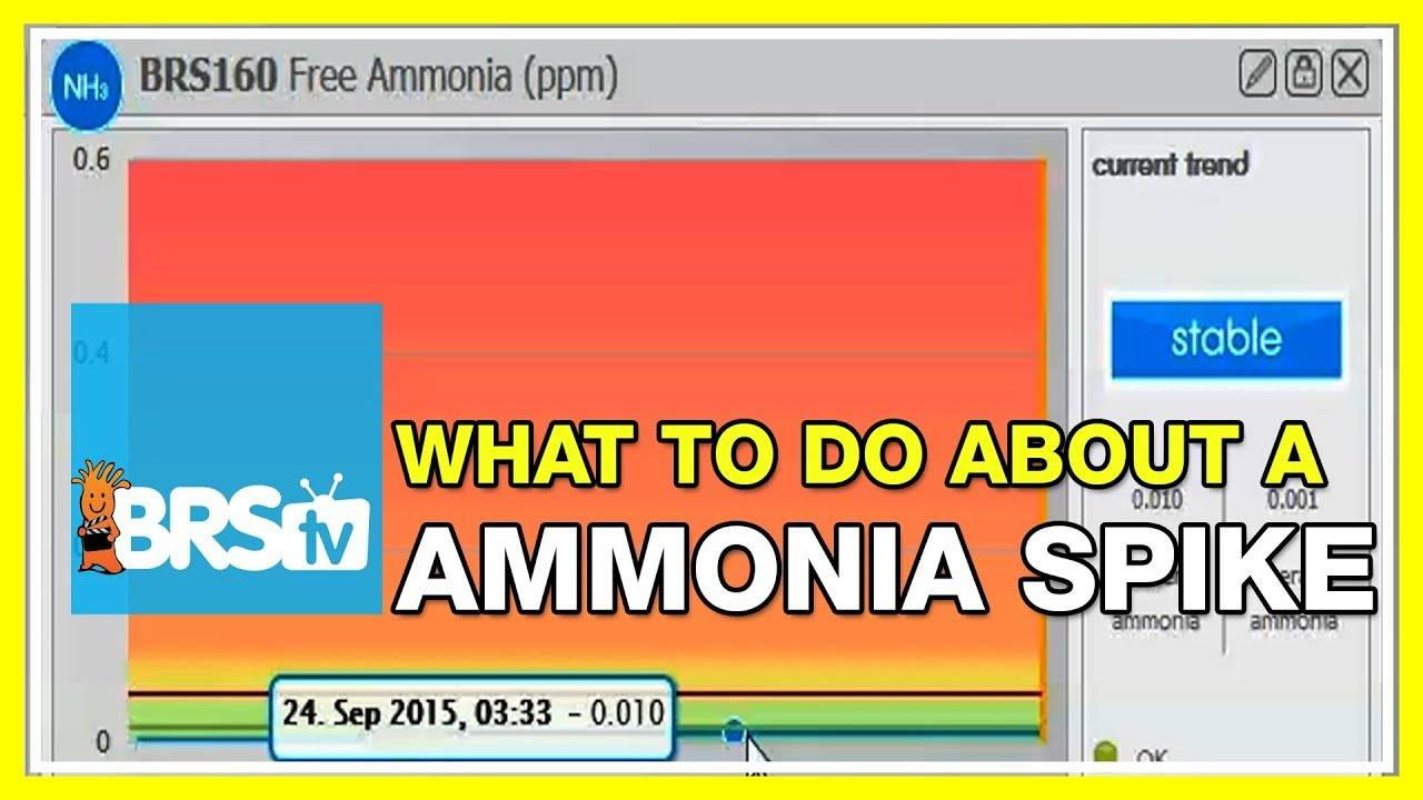 FAQ #21: If the Seneye indicated an ammonia spike, what would be the course of action? | #52FAQ